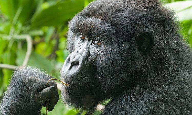 https://cdn2.hubspot.net/hubfs/5873592/itinerary_expedition/Rwanda1_Itinerary_Main.jpg